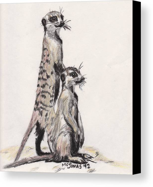 Wildlife Canvas Print featuring the drawing Meerkats by Marqueta Graham