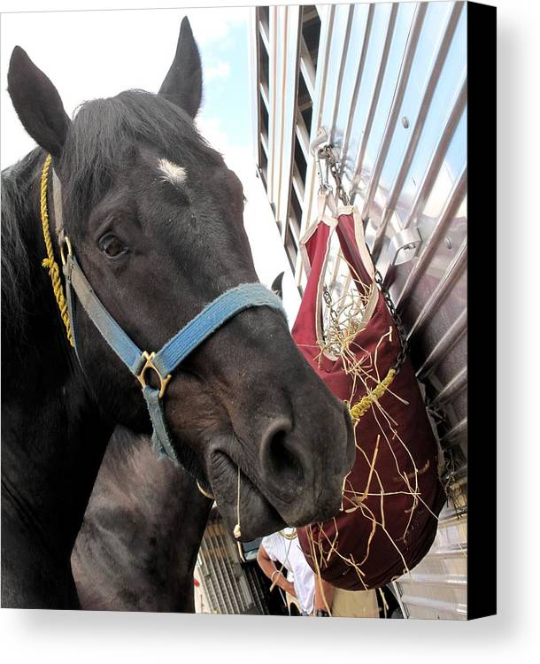 Horse Canvas Print featuring the photograph Reward For A Job Well Done by Ian MacDonald