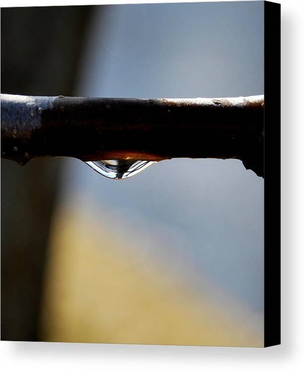 Rain Drop Canvas Print featuring the photograph Single Drop by Marilynne Bull