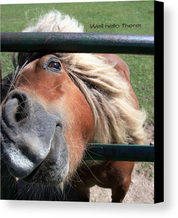 Horse Canvas Print featuring the photograph Well Hello There by Joanne Coyle