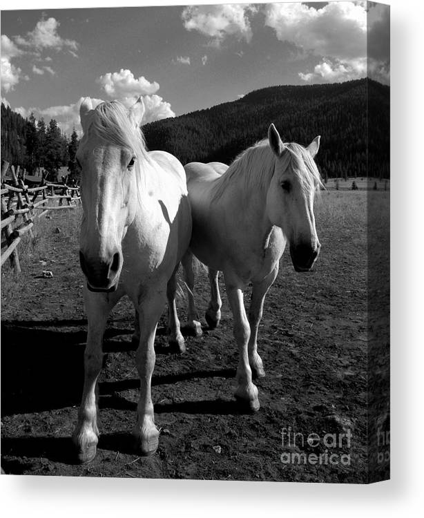 Horses Canvas Print featuring the photograph Best Friends by Jennie Stewart