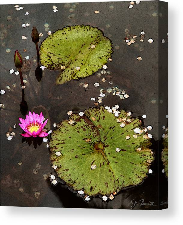 Serene Canvas Print featuring the photograph Serenity by Joe Bonita