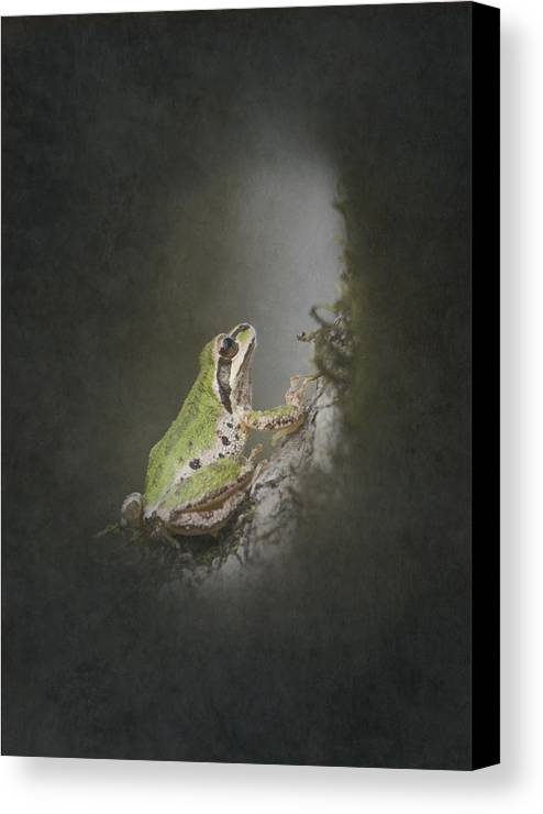 Frog Canvas Print featuring the photograph Looking Up by Angie Vogel