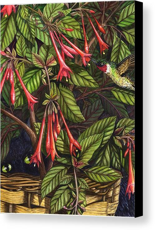 Fuchsia Canvas Print featuring the painting Lurking by Catherine G McElroy