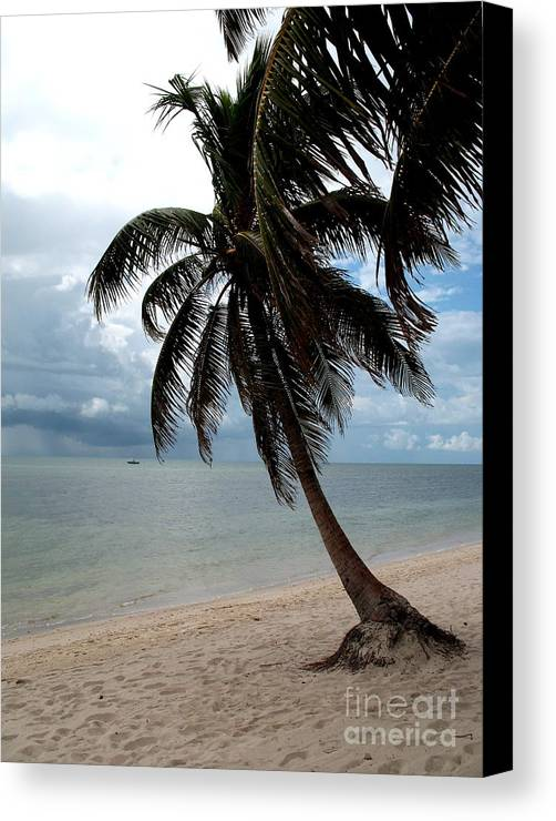 Beach Canvas Print featuring the photograph Palm On The Beach by Christiane Schulze Art And Photography