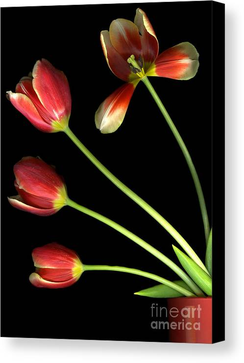 Scanography Canvas Print featuring the photograph Pot Of Tulips by Christian Slanec