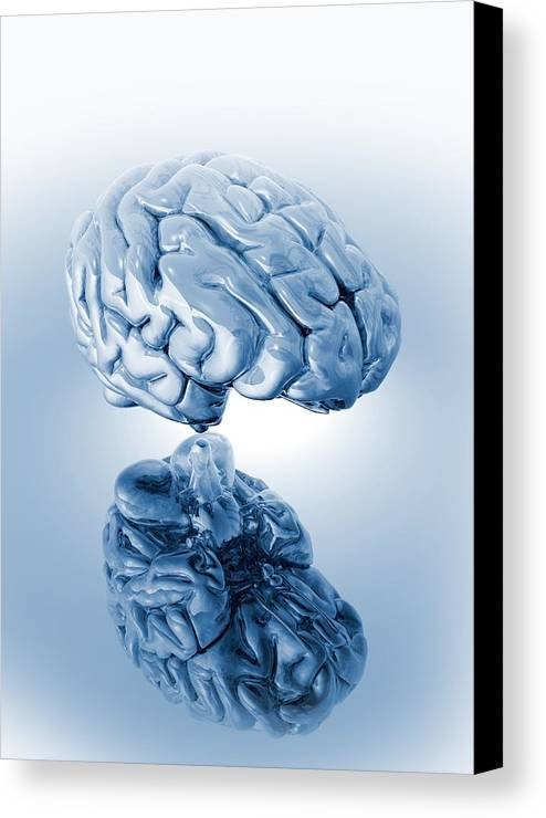 Artwork Canvas Print featuring the photograph Human Brain, Artwork by Victor Habbick Visions