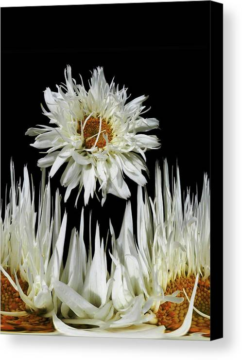 Flora Canvas Print featuring the photograph 1028 by Peter Holme III