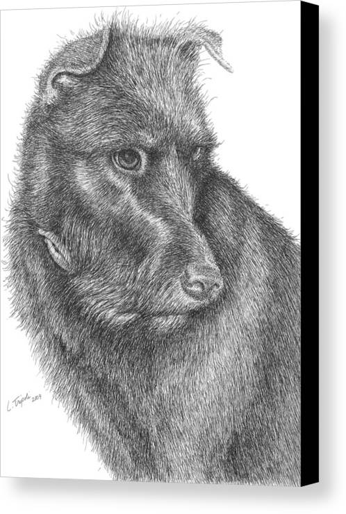 Dog Canvas Print featuring the drawing Beau by Lawrence Tripoli