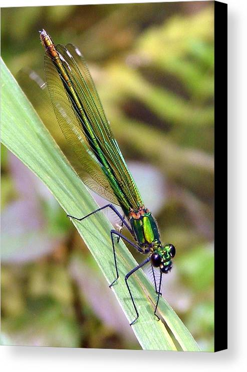 Dragonfly Canvas Print featuring the photograph Green Damselfly by Ramona Johnston