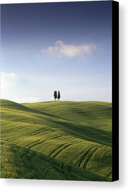 Photograph Canvas Print featuring the photograph Twin Cypresses by Michael Hudson