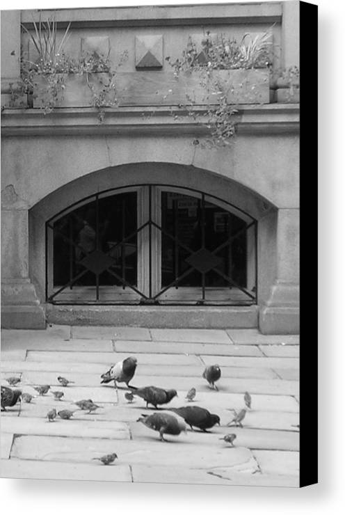 Pigeons Canvas Print featuring the photograph Boston Scene by Nancy Ferrier