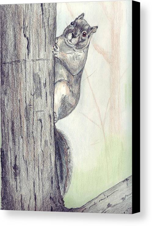 Color Pencil Canvas Print featuring the drawing Feeder Raider by Debra Sandstrom