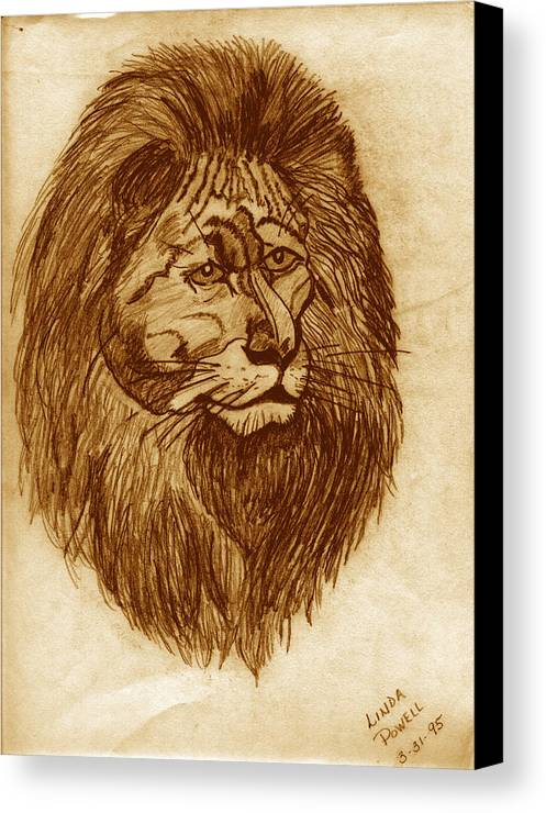 Drawing Canvas Print featuring the digital art Lion by Linda Powell