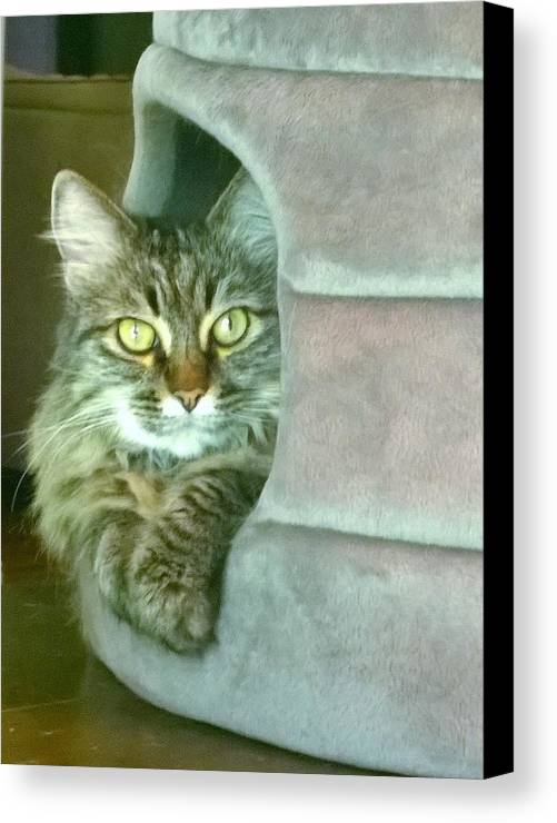 Cat Canvas Print featuring the photograph My House by Gayle Miller