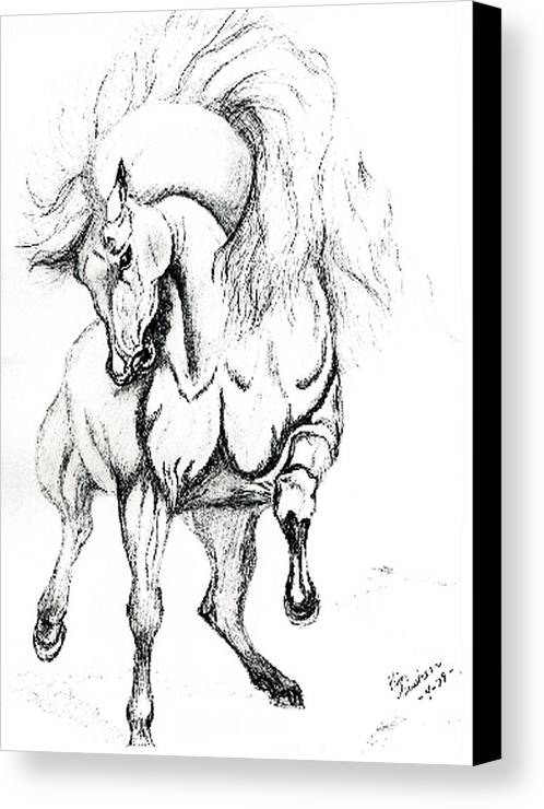 Horses Canvas Print featuring the drawing Noble Stallion by Kim Souza