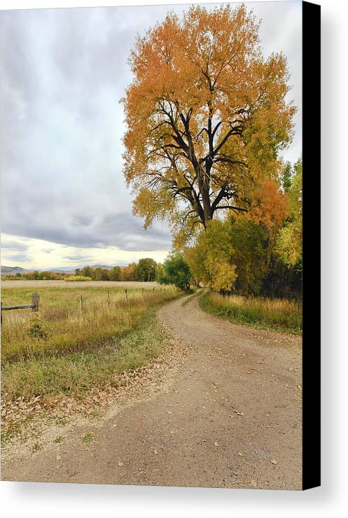 Trees. Fallcolors .big. Tree. Dirt. Road. Long. Road. Yellow. Grass. Cloudy. Storm. Green. Blue. Aspin. Yellow. Aspin Tree Phbgotography. Mixed Media. Mixed Media Photography. Colorado Fall Colors. Mixed Media Fall Colors. Fall Color Greeting Cards. Fort Collins Colorado Fall Colors. Colorado Greeting Cards.  Canvas Print featuring the photograph Road To Dads Place by James Steele