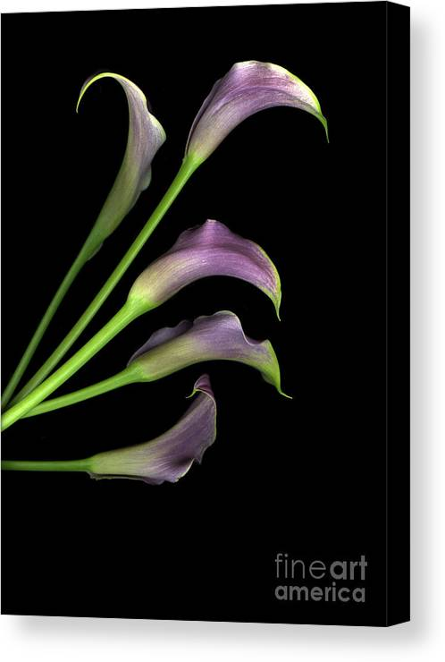 Scanart Canvas Print featuring the photograph Take Five by Christian Slanec