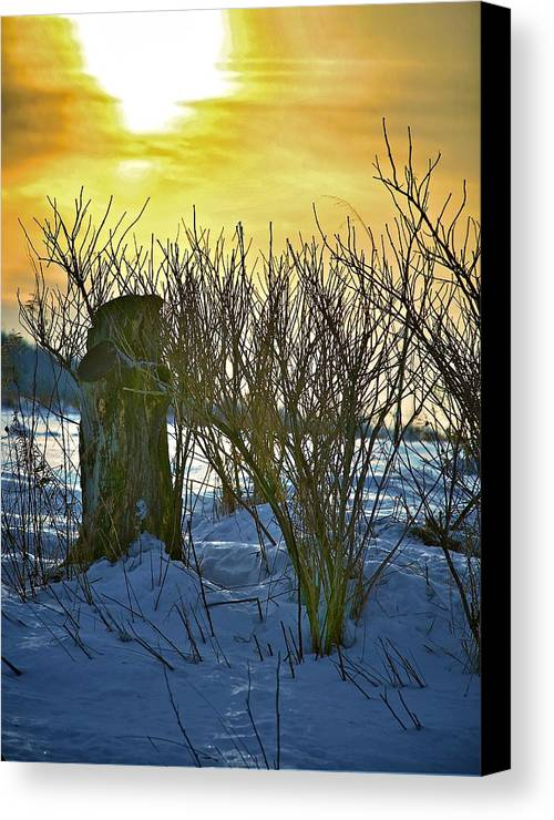 Sun Shine Nature Canvas Print featuring the photograph The Rabbit Trail by Robert Pearson