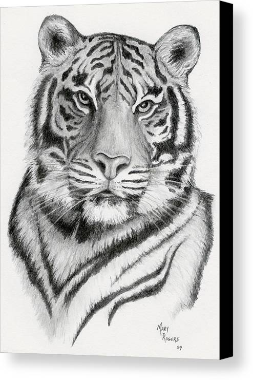 Tiger Canvas Print featuring the drawing Tiger by Mary Rogers