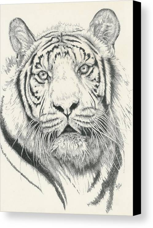 Tiger Canvas Print featuring the drawing Tigerlily by Barbara Keith