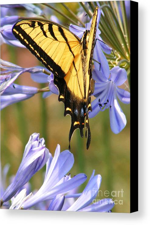 Butterfly Canvas Print featuring the photograph Touching Lilly by Gail Salitui