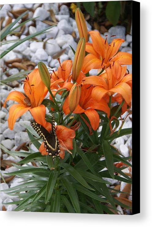 Flower Canvas Print featuring the photograph Untitled by Debbie May