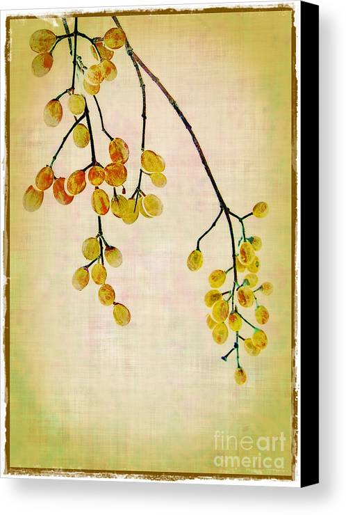 Yellow Canvas Print featuring the photograph Yellow Berries by Judi Bagwell
