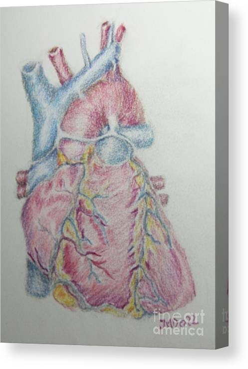 Anatomy Canvas Print featuring the drawing Heart  by Juanita Doll