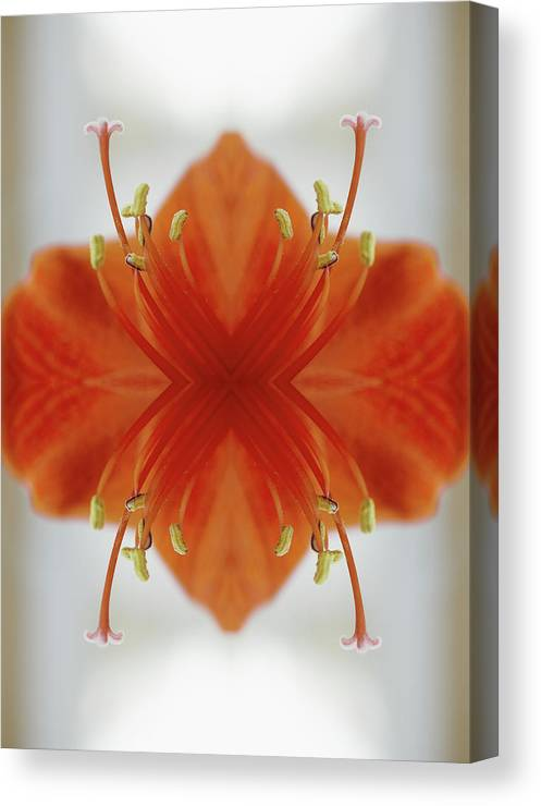Tranquility Canvas Print featuring the photograph Red Amaryllis Flower by Silvia Otte