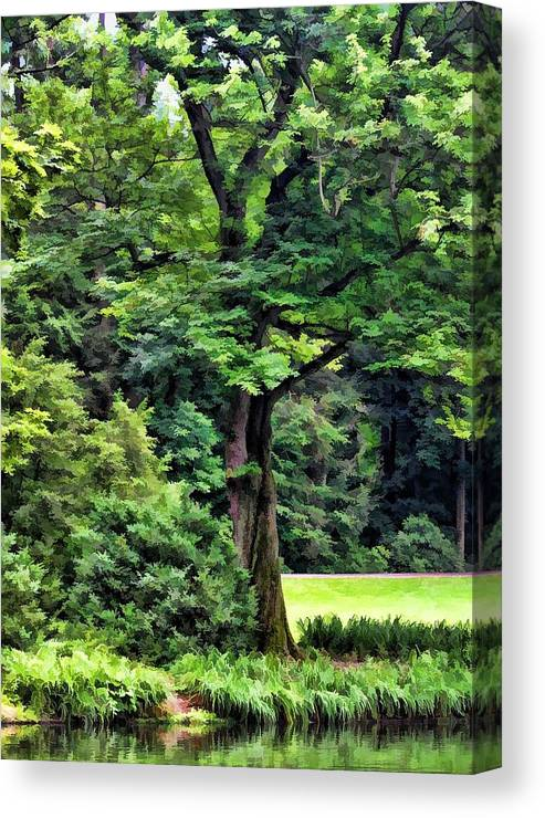 Nature Canvas Print featuring the photograph Shady by Joyce Baldassarre