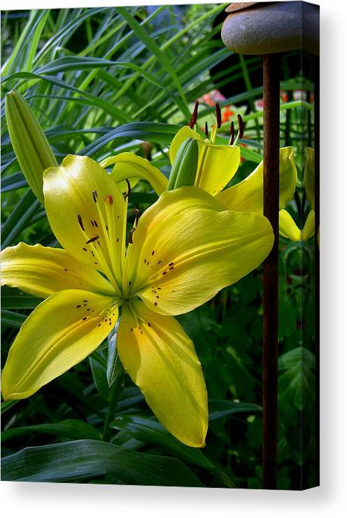 Day-lily; Yellow Canvas Print featuring the photograph Touched By The Sun by Larry Jones