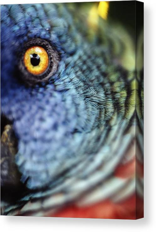 Vertical Canvas Print featuring the photograph Parrot, Close Up by Axiom Photographic