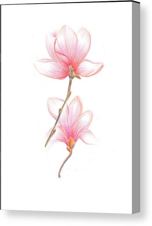 Reds Canvas Print featuring the painting Floral Sketch by Dina Holland