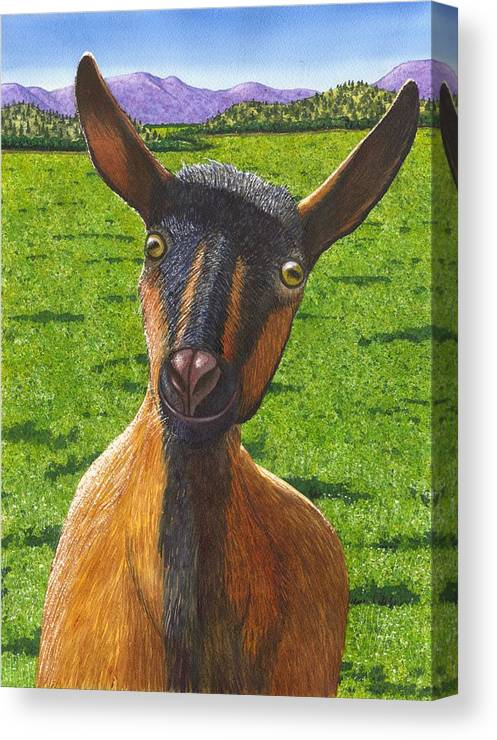 Goat Canvas Print featuring the painting Little Goat by Catherine G McElroy