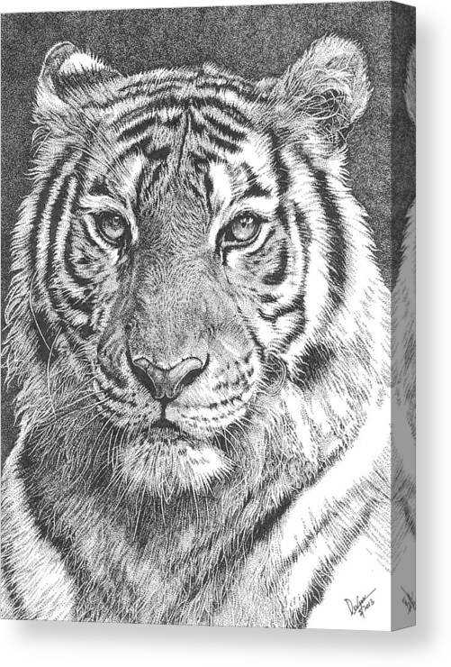 Tiger Canvas Print featuring the drawing Tiger by Deven Singh Kshetrimayum