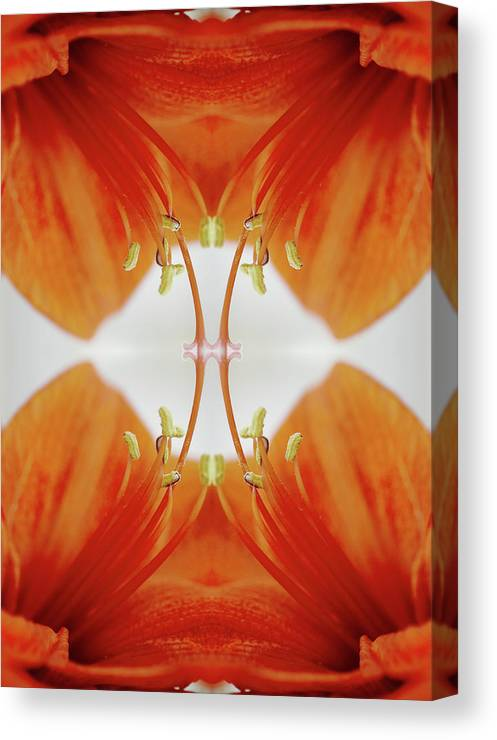 Tranquility Canvas Print featuring the photograph Inside An Amaryllis Flower by Silvia Otte