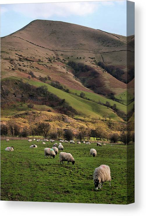Peak District National Park Canvas Print featuring the photograph Sheep Grazing In Peak by Michelle Mcmahon