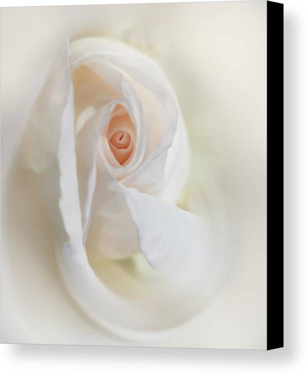 Rose Canvas Print featuring the photograph Abstract Pastel Rose Flower by Jennie Marie Schell