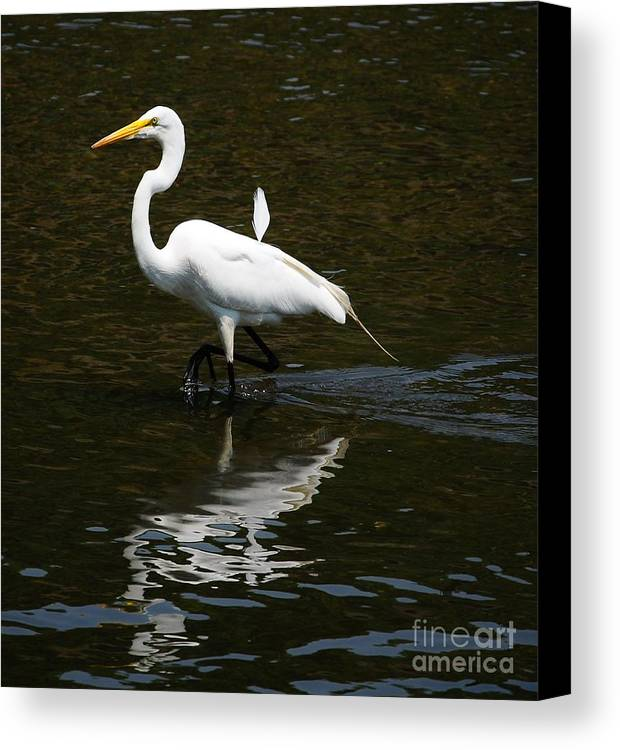 Bird Canvas Print featuring the photograph Great Egret by Elaine Manley