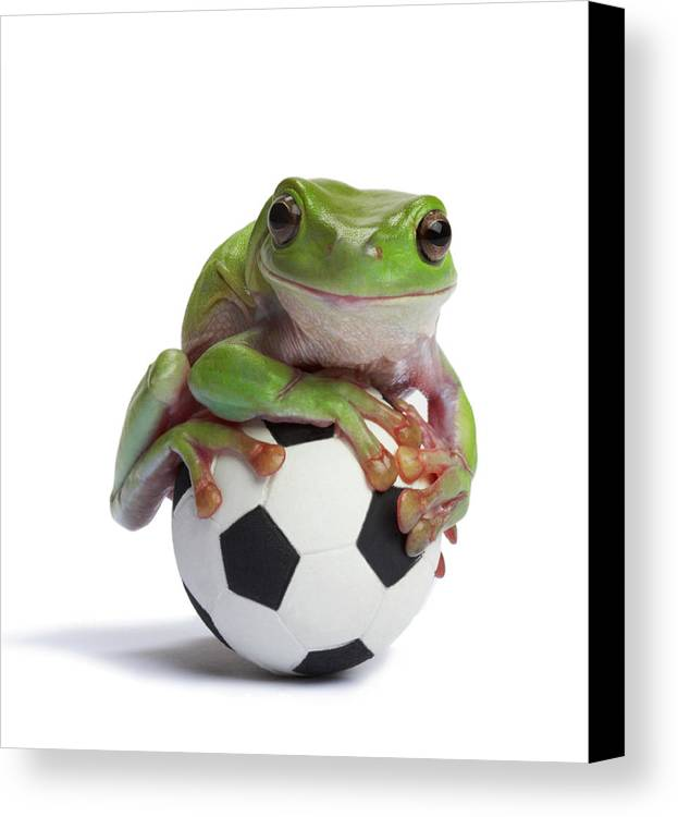 Vertical Canvas Print featuring the photograph Whites Tree Frog On Small Football by American Images Inc