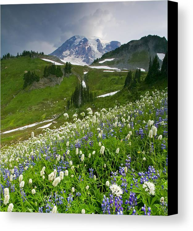 Rainier Canvas Print featuring the photograph Lupine Storm by Mike Dawson