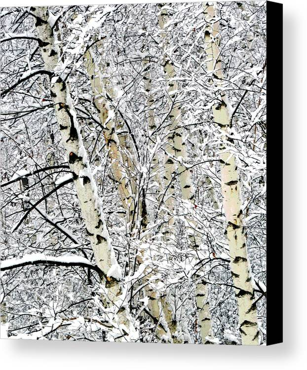 Birch Trees Canvas Print featuring the photograph Parallel Beauties by Bryan Shane