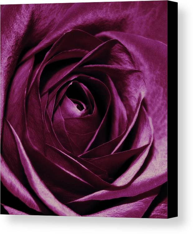Flowers Canvas Print featuring the photograph Purple Passion by Cathie Tyler