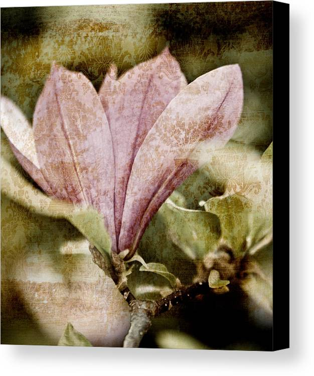 Magnolia Flower botanical Art Nostalgia vintage Magnolia Botanical Art Botanic Botany Flowers Vintage Retro Grunge Pink Floral Florals Garden Gardening Gardens Gardener Old Antique Antiques Shabby Chic country Living old Fashioned Abstract Abstracts old Time Nostalgic Scratched Beautiful Pretty Pale Sepia Black And White Bw Ancient old Times old Time Contemporary Modern Design Designs Texture Textured Painting Paintings Print Prints Brown Browns modern Art Canvas Print featuring the mixed media Vintage Magnolia by Frank Tschakert