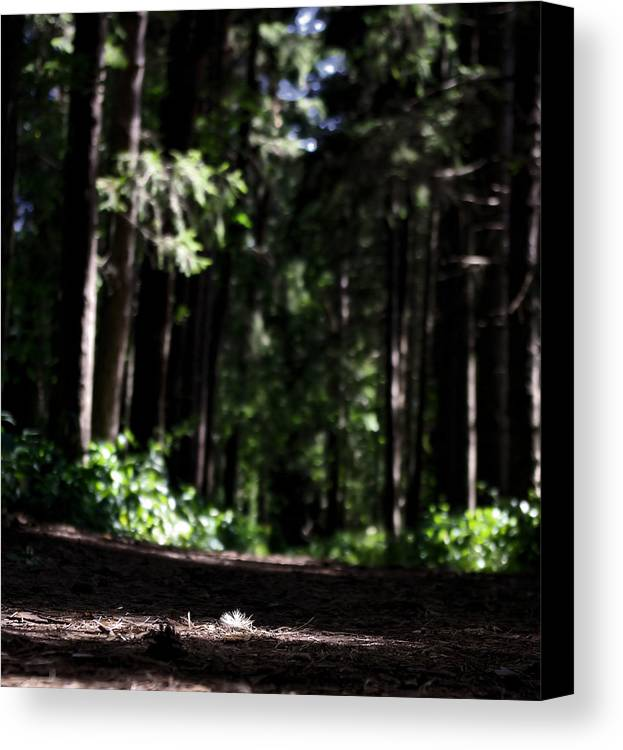 Photo Canvas Print featuring the photograph Where Are You by Ryan McIntyre