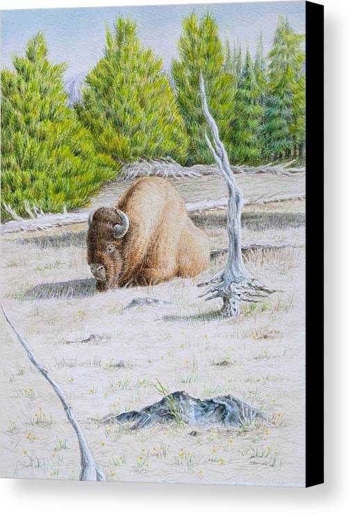 Buffalo Canvas Print featuring the painting A Buffalo Sits In Yellowstone by Michele Myers