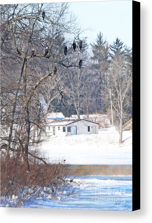 Bald Eagles Canvas Print featuring the photograph Bald Eagles In Tree In Grand Rapids Ohio 3996 by Jack Schultz