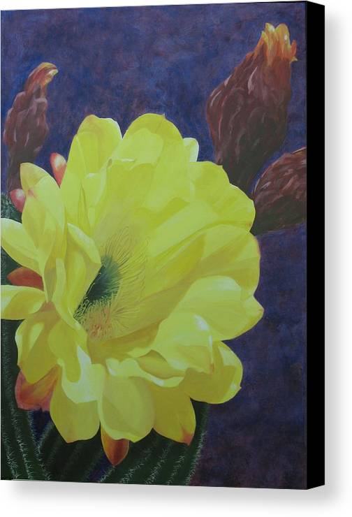 Argentine Cactus Bloom Canvas Print featuring the painting Cactus Morning by Janis Mock-Jones