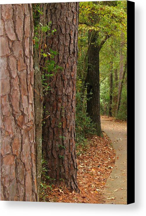 Tall Trees Canvas Print featuring the photograph Natural Beauty by Connie Fox